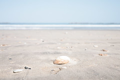 shell - summer gets closer - (Woodenship) Tags: blue sea summer beach japan shell fujifilm ibaraki sandybeach xe2