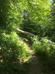 IMG_1603 (daach14@sbcglobal.net) Tags: usa vermont nature outdoor green photo trip travel sky blue woods trees forest beauty life moutain rock rocks view iphone6 panorama