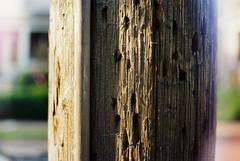 Sharp Zeiss (sixthstationphoto) Tags: film 35mm gold200 contax137mdquartz