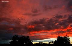 Apocalyptic sky (Setsukoh) Tags: blue sunset red sky cloud sun france tree nature silhouette yellow forest jaune dark rouge evening soleil frankreich skies apocalypse bleu ciel sombre thunderstorm nuage soir sonne lorraine arbre fort orage coucherdesoleil cieux grandest brochall lothringen