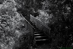 The Stairway (SCOTTS WORLD) Tags: trees light shadow summer blackandwhite usa sunlight nature monochrome leaves june stairs rural america landscape midwest unitedstates angle pov michigan perspective panasonic rochester adventure modified bushes 2016 hff oaklandcounty paintcreektrail