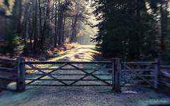 a path to dreamland (sure2talk) Tags: apathtodreamland path gate newforest nikond60 lensbaby lensbabycomposerpro sweet50optic 116picturesin2016115gateorgates lensbabylove