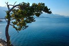 A lonely tree (Piotr Tylski) Tags: travel sea seascape turkey mediterranean journey fujifilm vacations kemer fujixe1