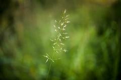 Childhood. (marco soraperra) Tags: light shadow verde green nature grass nikon bokeh pflanze gras nikkor