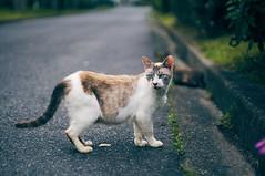 DSC06770 1 (hyeonseokoo) Tags: cat