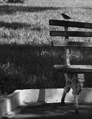 One little bird (Tssio Kaihara) Tags: interior banco pssaro pb ourinhos praa bentivi kaihara tssio tssiokaihara
