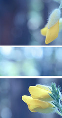 spring bokeh_triptych (RL Mulholland) Tags: blue nature closeup forest spring soft triptych dof bokeh details yellowflower 1855mm delicate canoneos600d rebelt3i