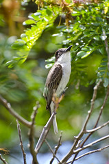Bird Perching (dpapworth) Tags: tree bird leaves leaf feather vieques hixislandhouse nikond7000