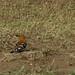 Tanzania-Masek-SafariDrive-145