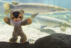 Giant fishes!!! (Kewty-pie) Tags: river fishes kuma toysfield