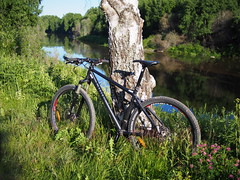 2013 Bike 180: Day 133, June 19 (olmofin) Tags: bicycle finland river koivu birch vantaa joki bike180 2013bike180