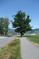 Altstätten - Nature respected