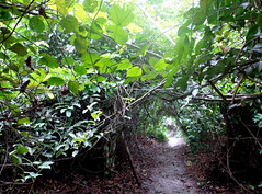 grotto path (dotun55) Tags: green nature leaves lagos naturereserve nigeria grotto passage lekkiconservationcentre