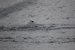 IMG_3978 (koval_volkovalexey) Tags: фото photo rc racing model boat world championship 2013 belgium gent sports photographer by alex kovalvolkov alexey akv