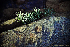 Mosaic rock (John Prior 55) Tags: canada newfoundland rocks parks nationalparks tablelands grosmornenationalpark