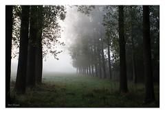Autumn landscape (thanks for 660.000 hits) Tags: autumn trees nature photography bomen fotografie herfst natuur bmeijers bertmeijers