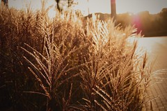 DSC_0012 (Grey Moth) Tags: park autumn sunset fall nature digital forest warm colours leafs d40