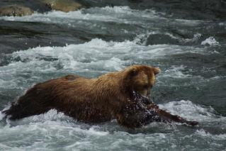 Alaska Luxury Fly-Out Fishing Lodge 47