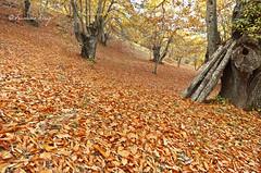 Los colores del otoño. (Francisco J. Pérez.) Tags: naturaleza atardecer paisaje málaga pentax14mm28 pentaxk5 ´franciscojpérez