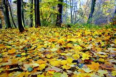 l'automne ... (evko ...) Tags: blinkagain bestofblinkwinners blinksuperstars bestofsuperstars blink4gallery