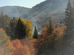 Steam Powered Forest (beccacfleming) Tags: autumn sky mist mountain color tree fall leaves fog america landscape lava october break hike steam idaho adventure indie land hotspring