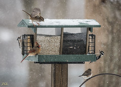 Feeding in the Snow (HubbleColor {Zolt}) Tags: winter snow bird downywoodpecker cardinal