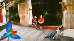 The Walk III (Roxy Varlow ) Tags: street plants valencia animals bar photoshop calle plantas walk coffeeshop forbidden paseo tables photomontage animales prohibido parrots mesas cafetera fotomontaje loros roxyvarlow vision:outdoor=0667