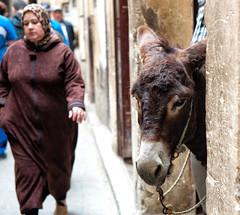 Medina de Fez (miguelangelortega) Tags: africa animal calle mujer ciudad mercado morocco fez asno fes comercio