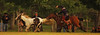 Al enlazar... (Eduardo Amorim) Tags: horses horse southamerica argentina criollo caballo cheval caballos cavalos pferde cavalli cavallo cavalo gauchos pferd soe pampa hest hevonen chevaux gaucho 馬 américadosul häst gaúcho 말 campero amériquedusud лошадь gaúchos 马 sudamérica suramérica américadelsur סוס areco südamerika crioulo criollos حصان άλογο flickrsbest camperos americadelsud mywinners ม้า crioulos cavalocrioulo americameridionale caballocriollo campeiros campeiro eduardoamorim cavaloscrioulos ঘোড়া megustaríapodertenermásestrellitasrosasparafotoscomoésta