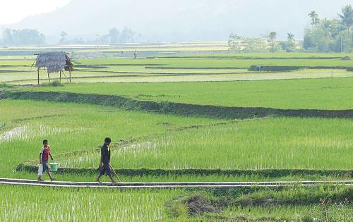 59. Rice Life