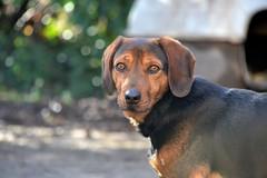 DSC_1440 (auroresb091) Tags: dog chien love friend sweet amour fidèle meilleuramidelhomme