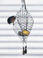 Going Down Under (Steve Taylor (Photography)) Tags: city newzealand christchurch white bird silhouette metal cheese fence wire mesh canterbury nz southisland highkey cbd chickenwire weights