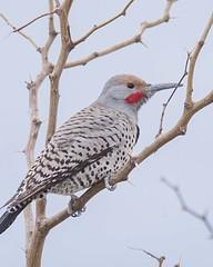Bird Viewing Preserve_Henderson (JME_Photos) Tags: nature birds canon wildlife nevada henderson flicker 400mm
