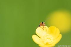 DN9A8640 (Josette Veltman) Tags: macro nature canon bug natuur bugs photowalk lente zwolle landschap insecten ivn westerveldsebos photowalkzwolle