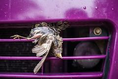 grilling bird (herbacae) Tags: newzealand bird car nationalpark grill nz abel tasman campervan neuseeland