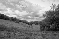 Distant Grazing in the distance (II) [BW] (Modesto Vega) Tags: tree green grass landscape spring nikon cows outdoor surrey pastoral grazing earlyspring reigate d600 surreyhills grazingcows