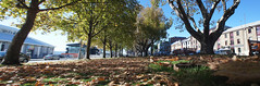 the low down (keith midson) Tags: autumn trees panorama leaves canon vintage sony low tasmania salamanca hobart stitched fd nex 17mm nex5