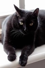 good morning! (margycrane) Tags: pet animal cat blackcat ola catsportrait