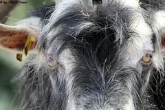 IMG_8818 (u.wittwer) Tags: park zoo schweiz switzerland tiere suisse tierpark heimat arth naturpark goldau widi