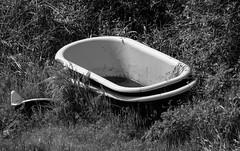 Outdoor Bath (maytag97) Tags: bathtub discarded outdoorbathtub maytag97