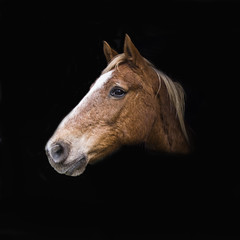 One for the Horse Lovers (Rob's4tography) Tags: horse wales cardiff stable equestrian equine mane weekendbreak stbridessuperely parccoedmachencountrycottage