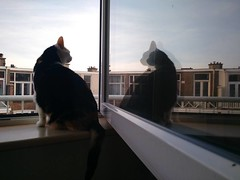 morning (milov) Tags: instagram phonecam motox fbme tweetme home animals cats window windowsill reflection poek