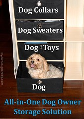 Sadies New Storage Solution (yourdesignerdog) Tags: dog pets cute dogs smiling tongue wednesday out photography blog all furniture designer wordpress sadie storage posts owners wordless ifttt