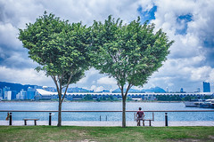 listening to the sea (Sing Sing Chan) Tags: park street sea tree sunshine ferry 35mm canon landscape photography hongkong pier scenery cityscape peace photographer waterfront documentary peaceful silence 6d hongkonger singsingchan singsingchangraphy