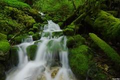 Ruisseau de la Touvire en cru - Foucherans (francky25) Tags: en de la franchecomt cru doubs ruisseau touvire foucherans