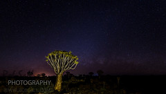 Quivertree Forest (robsall) Tags: africa camp vacation canon lodge canon5d namibia canoneos 1635 2015 canonllens canon1635mm quivertreeforest canon1635 1635f28 1636mm quivertreeforestcamp canon1635mmf28liiusm canon5dmarkiii 5dmarkiii 5dm3 quivertreeforestrestcamp 5dmark3 5dmiii canon5dm3 canoneos5dm3 robsallphotography quivertreeforestlodge