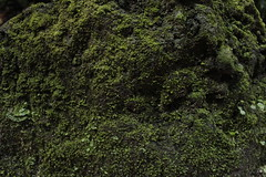 (iara gelpi) Tags: green nature rain moss raindrops