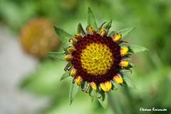 Botanical Garden Diomedes (Eleanna Kounoupa) Tags: flowers plants nature garden spring athens greece attica
