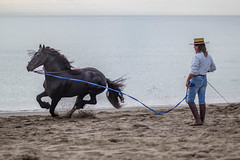 Andalusia (Pieter Mooij) Tags: horse spain andalusia longer spanje