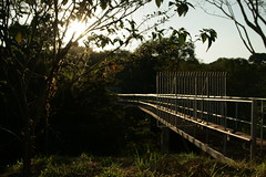(jeanmarccos) Tags: travel bridge trees light sunset brazil sky detail tree green planta sol nature rain brasil clouds canon way real see evening photo amazing nice flickr day natural path walk cotidiano great fine pic paisagem cu ponte adventure prdosol photograph journey campo nuvem rvore anoitecer entardecer serenidade canonphoto